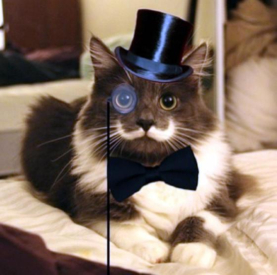 Hasil gambar untuk tuxedo cat